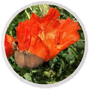 Awakening Poppy Round Beach Towel