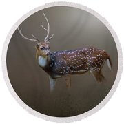 Axis Deer Round Beach Towel by Marion Johnson