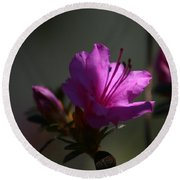 Azalea In The Light  Round Beach Towel
