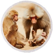 Baboon Family Having Fun In The Desert Round Beach Towel