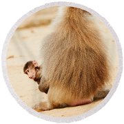 Baboon With A Baby  Round Beach Towel