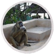 Baboon With A Sweet Tooth Round Beach Towel