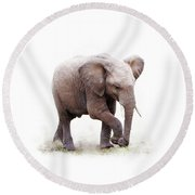 Baby African Elephant Isolated On White Round Beach Towel