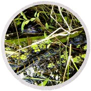 Round Beach Towel featuring the photograph Baby Alligator 001 by Chris Mercer