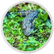 Baby Alligator Round Beach Towel