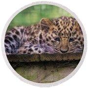 Baby Amur Leopard Round Beach Towel