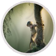 Baby Baboon In Tree Round Beach Towel