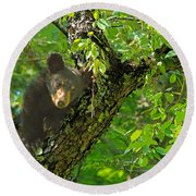 Round Beach Towel featuring the photograph Baby Bear by Geraldine DeBoer