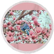 Baby Blue Jay In Magnolia Blossoms  Round Beach Towel by Janette Boyd