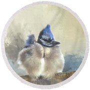 Baby Bluejay In Winter Round Beach Towel