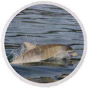 Baby Bottlenose Dolphin - Scotland  #35 Round Beach Towel
