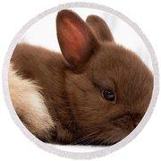 Baby Bunny  #03074 Round Beach Towel