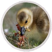 Baby Chick With Water Flowers Round Beach Towel