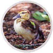 Baby Duck Sitting Round Beach Towel