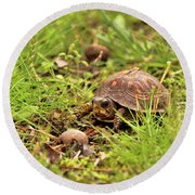 Baby Eastern Box Turtle Round Beach Towel
