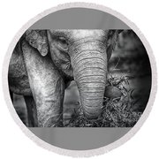 Baby Elephant 1 Round Beach Towel