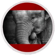 Baby Elephant Close Up Round Beach Towel by Charuhas Images