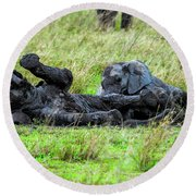 Baby Elephants Playing In The Mud Round Beach Towel