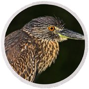 Round Beach Towel featuring the photograph Baby Face - Yellow-crowned Night Heron  by HH Photography of Florida