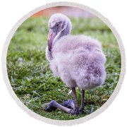 Baby Flamingo Sitting Round Beach Towel