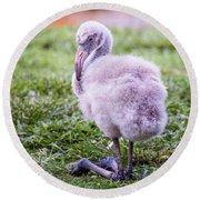 Baby Flamingo Sitting Round Beach Towel