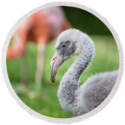 Baby Flamingo With Mom In Background Round Beach Towel