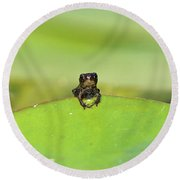 Baby Frog On Lily Pad 8967 Round Beach Towel