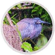 Baby Great Blue Heron - Ardea Herodias Round Beach Towel