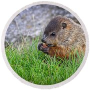 Baby Groundhog Eating Round Beach Towel by Bob Orsillo