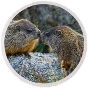 Baby Groundhogs Kissing Round Beach Towel