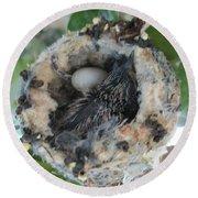 Baby Hummingbird 2 Round Beach Towel