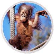 Baby Orangutan Climbing Round Beach Towel