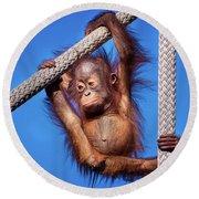 Baby Orangutan Hanging Out Round Beach Towel