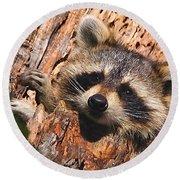Baby Raccoon Round Beach Towel by William Jobes