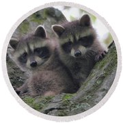 Baby Raccoons In A Tree Round Beach Towel by Dan Sproul