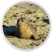 Baby Seal In Sand Round Beach Towel