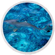 Baby Shark In The Turquoise Water. Production By Nature Round Beach Towel