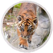 Baby Sumatran Tiger Cub Round Beach Towel by Richard Bryce and Family