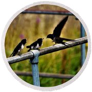 Baby Swallows Feeding Round Beach Towel