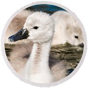 Baby Swan Close Up Round Beach Towel