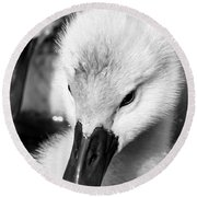 Baby Swan Headshot Round Beach Towel