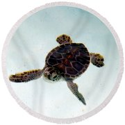 Round Beach Towel featuring the photograph Baby Turtle by Francesca Mackenney