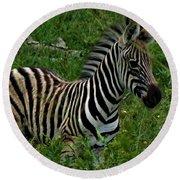 Baby Zebra  Round Beach Towel