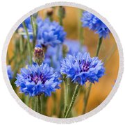Bachelor Buttons In Blue Round Beach Towel