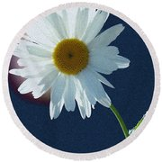 Backlit Daisy Round Beach Towel