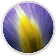Backlit Iris Flower Petal Close Up Purple And Yellow Round Beach Towel