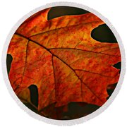 Round Beach Towel featuring the photograph Backlit Leaf by Shari Jardina