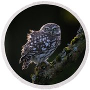 Backlit Little Owl Round Beach Towel