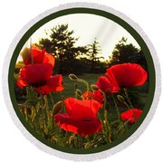 Backlit Red Poppies Round Beach Towel