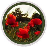 Backlit Red Poppies Round Beach Towel by Mary Wolf